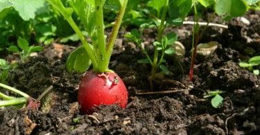 Consumidores e produtores abertos a produção alimentar mais sustentável