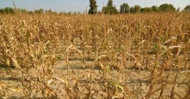 Irão lança plano de agricultura no exterior