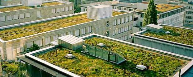 Escritórios londrinos plantam vegetais no telhado
