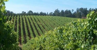 França reconquista liderança da produção mundial de vinho