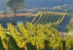 Viticultura de precisão permite gerir melhor o solo