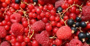 O aquecimento global e os pequenos frutos: Bagas de Portugal organiza seminário