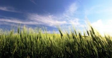agricultura outubro de