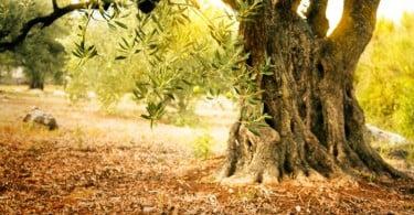 oliveira novembro