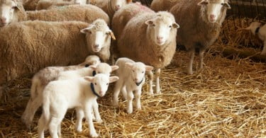 Sistema Nacional de Informação e Registo Animal estreia novas funcionalidades