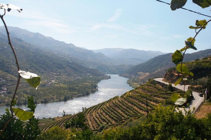 Produção de vinhos do Douro deverá crescer nesta campanha