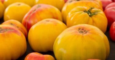 tomates feios Distribuição Hoje