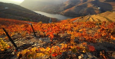 Quinta Sogrape Vinhos - Vida Rural