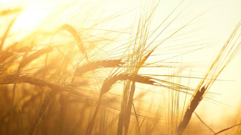 Governo quer aumentar produção de cereais