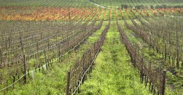 vinhas Vida Rural