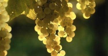 Vinhos verdes - CVRVV - Vida Rural