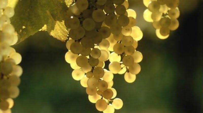 Vinhos verdes CVRVV Vida Rural