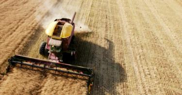 agricultura colheita Vida Rural