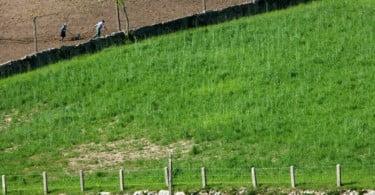 TAGUS - pequenos investimentos na agricultura - Vida Rural