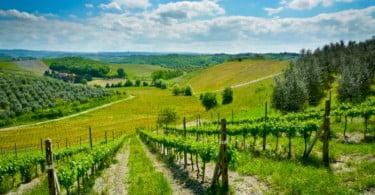 vinha - produção de uvas