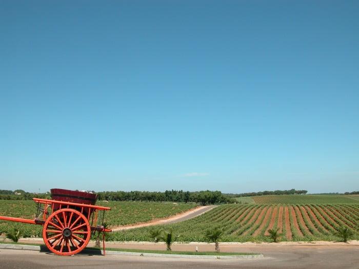 Adega Marcolino Sebo - Vida Rural