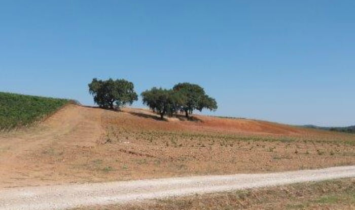Alentejo - Grupo Parras - Vida Rural