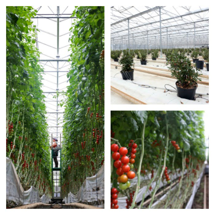 Horticilha - agricultura biológica - Vida Rural