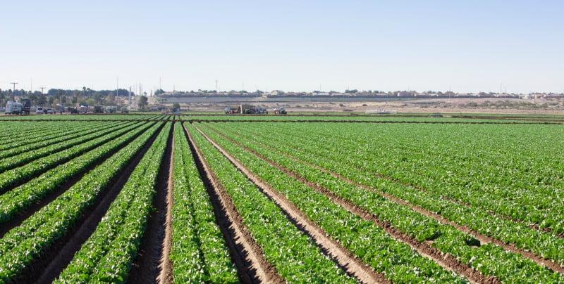Agricultura pode travar alterações climáticas