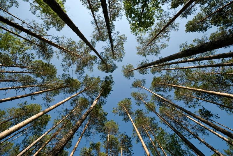 florestas portuguesas