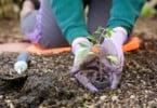 Quer criar uma horta biológica? O Alegro de Alfragide explica como