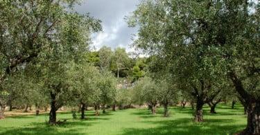 olival Vida Rural