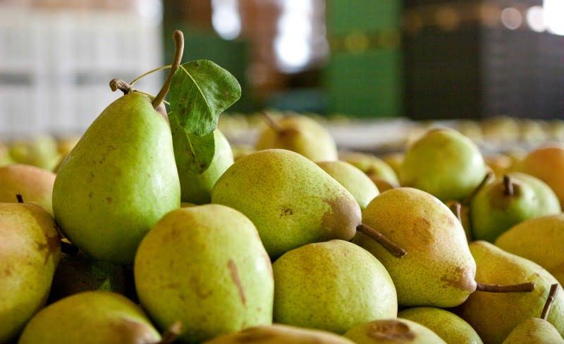 Produtores do Oeste preveem colheita de 200 mil toneladas de pera Rocha