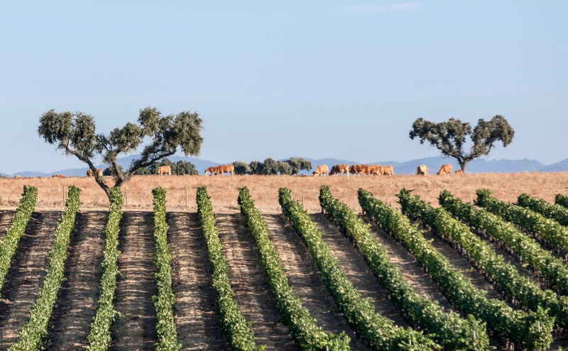 Programa de Sustentabilidade dos Vinhos do Alentejo distinguido internacionalmente