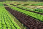 Easy Fruits & Salads - Vida Rural