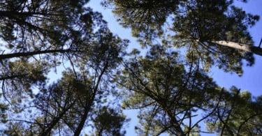 Floresta José Paulo Santos UTAD Vida Rural