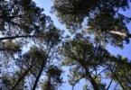 Floresta - José Paulo Santos UTAD - Vida Rural