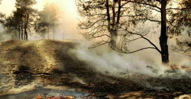 floresta com incêndio