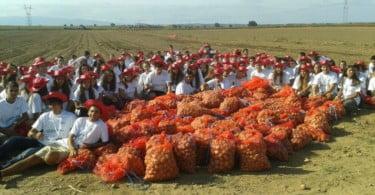 Restolho praxe U Católica batata Vida Rural