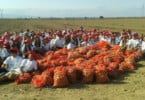 Restolho - praxe U Católica - batata - Vida Rural