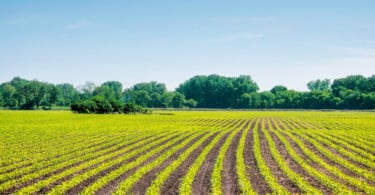 agricultura biológica Vida Rural