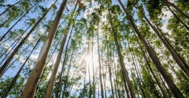 Projeto Melhor Eucalipto promove sessão informativa a proprietários