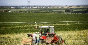 Alho Vida Rural