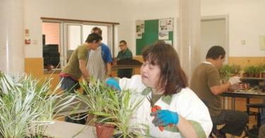 Horticultura-Social-e-Terapêutica-2016-Vida-Rural