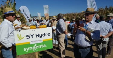 Syngenta - dia de campo milho - Vida Rural