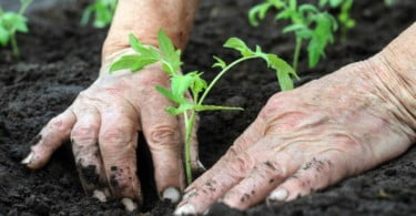 agricultura - Vida Rural