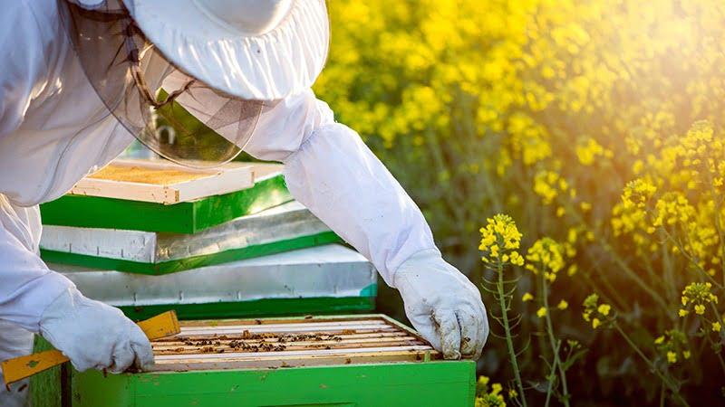 apicultor Vida Rural