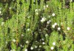 camarinha - Especial Hortofrutícolas - Vida Rural