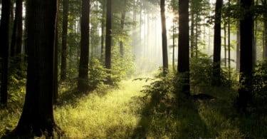 floresta Vida Rural