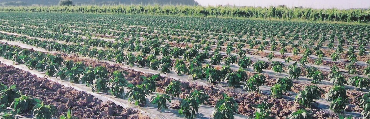 Especial Hortofrutícolas