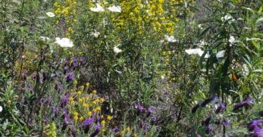plantas aromáticas e medicinais Especial Hortofrutícolas Vida Rural