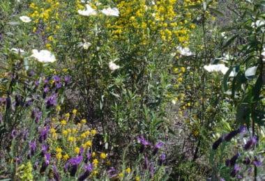 plantas aromáticas e medicinais - Especial Hortofrutícolas - Vida Rural