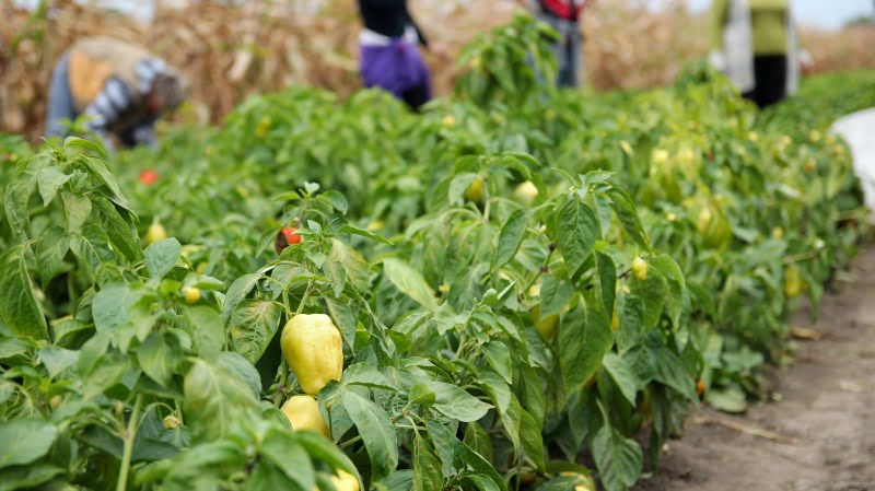 agricultura biológica - Vida Rural