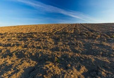 Jovens agricultores nacionais querem apoiar agricultura moçambicana