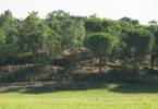Floresta Rodrigo Cabrita Vida Rural