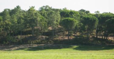 Floresta - Rodrigo Cabrita - Vida Rural